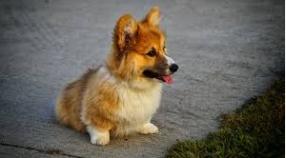 爲什麽狗狗喜歡生病?是什麽原因導致的?